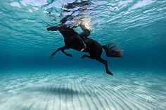 SEA HORSE.....makes me think of a great Movie ''The Black Stallion''*