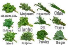 Drying Herbs:    Basil Leaves (break veins and stems to aid drying) Preparation:  Clip leaves 3 to 4 inches from top of plant just as first buds appear, pat dry. Drying Time: 20-24 hrs. Uses:  Italian and Mediterranean dishes, tomato dishes, meat, salads, soups, fish, poultry and egg dishes