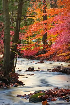 Beautiful fall leaves along the river