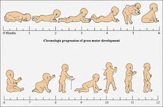 Dinosaur Occupational Therapy: Motor Milestones: From Birth-6 months