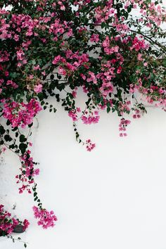 42 Ideas Flowers Wallpaper Iphone Photography Phone Wallpapers For 2019 Flowers Wallpaper, Flower Background Wallpaper, Nature Wallpaper, Screen Wallpaper, Wallpaper Backgrounds, Trendy Wallpaper, Wallpaper Desktop, Iphone Wallpapers, Greece Wallpaper