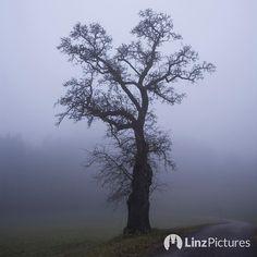 #goodmorning  . . . #earlybird #coffee #morning #linz #igerslinz #mühlviertel #fog #tree #landscape #landschaft #fromwhereistand #motivation #run #fitness #vegan #bio #outdoor #linzpictures #igersaustria #lowcarb