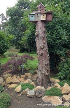 Bird condo atop old tree stump.