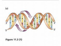 Heredity Lesson Plans, Worksheets & Printables