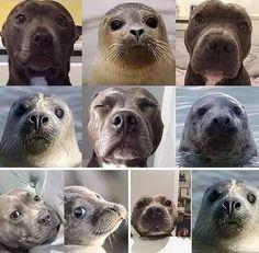 Funny Animal Memes, Dog Memes, Funny Animal Pictures, Funny Dogs, Cute Dogs, Funny Animals, Cute Animals, Funny Humor, Funny Stuff