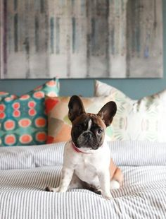The Bedroom Blast: Super Clean by Sunday — The January Cure: Assignment Deep Cleaning Checklist, Dog Cleaning, Cleaning Hacks, Clean Bedroom, Bedroom Cleaning, Clean Memes, New Beds, Super Clean, Home Buying