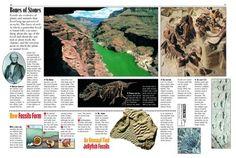 Bones and Stones - Kids Discover Rocks!