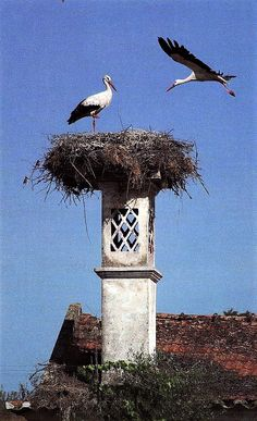 Storks Nesting खूबसूरत Photograph खूबसूरत PHOTOGRAPH |  #WHATSAPP #EDUCRATSWEB | In this article, you can see photos & images. Moreover, you can see new wallpapers, pics, images, and pictures for free download. On top of that, you can see other  pictures & photos for download. For more images visit my website and download photos.