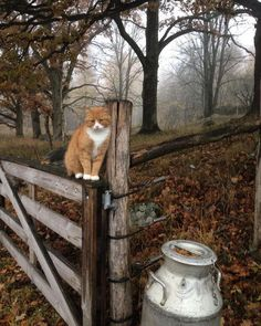 fall day with a kitty Animal Gato, Mundo Animal, I Love Cats, Cute Cats, Chat Beige, Animals And Pets, Cute Animals, The Ancient Magus Bride, Photo Chat