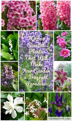Plants add color and texture to a garden, but they can also turn it into a fragrant paradise. By adding scented plants you can give a new dimension to your garden.