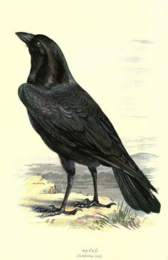 https://flic.kr/p/ac4mze | n41_w1150 | Familiar wild birds. v.1. London ; New York :Cassell,1883. biodiversitylibrary.org/page/23905235