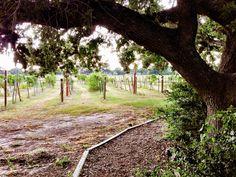 Messina Hof Winery - Bryan