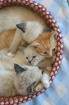 Basket full of kittens!! Photo by Laurie Cinotto via Flickr