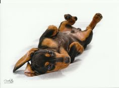 Mini dachshund. Please vote for this entry in Centerfold Photo Contest!