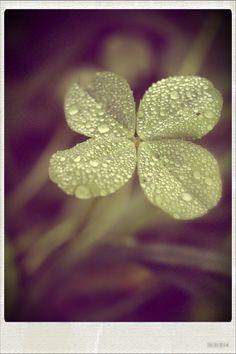 Four leaf clover...