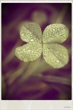 Four leaf clover...