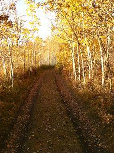 Pic taken fall of 2012 in central Alberta.