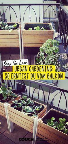 Tini_stadtbude ist absoluter Profi in Sachen Urban Gardening! Salat, Tomaten und… Tini_stadtbude ist absoluter Profi in Sachen Urban Diy Gardening, Organic Gardening, Container Gardening, Balcony Gardening, Gardening Courses, Vegetable Gardening, Gardening Books, Urban Garden Design, Urban Design
