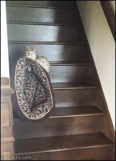 이사하는 고양이.gif