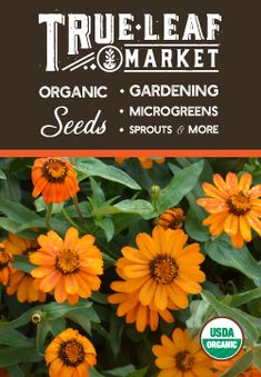 We choose only the best garden seed for our growers, including favorite heirloom, Non-GMO, and organic varieties that produce results year after year in well-fertilized soil, and gardens. Homemade Smoker Plans, Diy Smoker, Smoke House Diy, Cat Shelters For Winter, Growing Microgreens, Refrigerator Pickles, Starting Seeds Indoors, Pepper Plants, Self Watering Planter