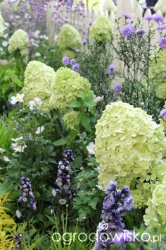 Zieleń to życie 2014 - strona 6 - Forum ogrodnicze - Ogrodowisko
