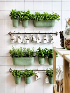 wall planters in kitchen
