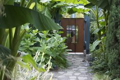 Palm leaves arching overhead shade this space whlie the shrubs below almost overtake the walkway, just as they would overtake a jungle path. The result is rich yet cool, a respite from the sun and a garden that invites you to explore what's past all the foliage.