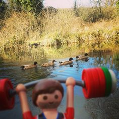 Hanging out with the ducks morning cardio