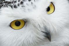 Des Animaux, Bec, Belle, Oiseau
