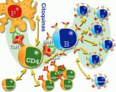 O sistema imunológico, também conhecido por sistema imunitário ou sistema imune