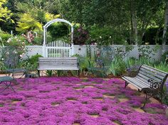 paths with groundcover | Creeping Thyme Ground Cover Seeds by SmartSeeds on Etsy