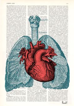 Spring Sale Heart and Lungs  Anatomy  book page Print on par PRRINT