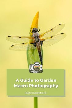 In this macro photography tutorial learn how to photograph wildlife and nature in your garden. A great guide for photographers in lockdown. Macro Photography Tips, Underwater Photography, Photography Tutorials, Wildlife Photography, Close Up Photos, How To Take Photos, Identify Plant, Bug Hotel, Plant Identification