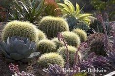 succulent landscape - Google Search