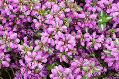 Cele mai rezistente flori la umbra. Idei pentru o gradina intunecata Cottages, Gardening, Plants, Cabins, Country Homes, Lawn And Garden, Cottage, Plant, Planets