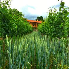 Wine Pictures - Uberti Winery - Franciacorta - My Instagram