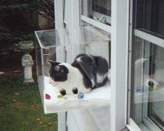 Cat window seat window room