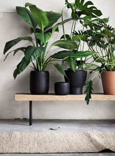Houseplants may also add moisture to dry air due to heat and ac. Indoor plants aren't only beneficial for your wellbeing but they have psychological advantages too. Green Plants, Potted Plants, Indoor Plants, Plants On Balcony, Greenhouse Plants, Indoor Gardening, Live Plants, Tropical Plants, Cactus Plants