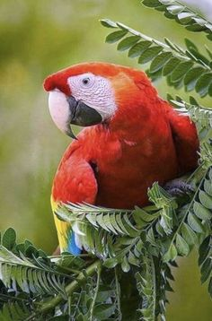 14 Finca Punta Islita Costa Rica An Ecological Jewel Ideas Costa Rica Costa Vacation Destinations