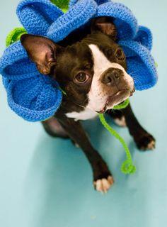 Crochet Flower Dog Collar por rosemarysbabymek en Etsy