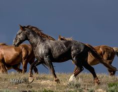 Mateo - Wild Horses of Sand Wash Basin