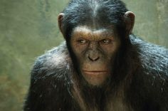 """Rise of the Planet of the Apes"": Can James Franco make peace with chimps?"