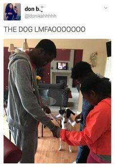 A husky is such a funny dog and also husky puppies are so cute. These funny videos and cute videos of huskies will cheer you up. Check out this funny dogs . Funny Black Memes, Really Funny Memes, Stupid Funny Memes, Funny Facts, Funny Laugh, Hilarious, Funny Stuff, Top Funny, Funny Memes
