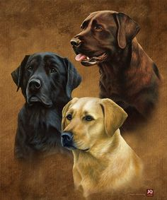 "Labradors"""" Luxury Queen Sized Plush Blanket"