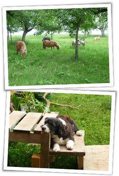 Ferienwohnung Sinnenberg - Ponys, Pferde, Schafe und Kleintiere - Bodensee