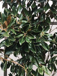 A Weekend in Waco & Magnolia — La Petite Farmhouse Magnolia Market Waco, Magnolia Homes, Modern Boho, Modern Rustic, Magnolia Table, Waco Tx, Modern Farmhouse Design, Magnolias, Weekend Trips