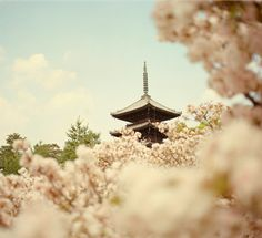 Visit Kyoto during Cherry Blossom Festival. Travel Sights, Places To Travel, Places To See, John Cheever, Cherry Blossom Season, Cherry Blossoms, Blossom Trees, Favim, Heaven On Earth