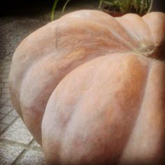 November pumpkin!
