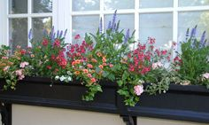 variety and repetition in a window box...English Garden in California -