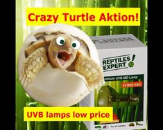 """NOW! UVB lamps with discount price. Promotion Code / Rabattcode: """"hammexpert"""". Buy now at www.reptilesexpert.com Turtle Reptile, Promotion Code, Lamps, Discount Price, Iguanas, Terrariums, Reptiles, Lightbulbs"""